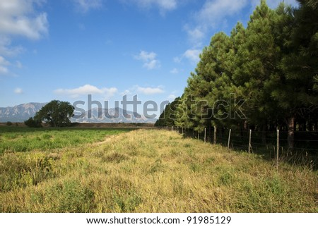 Pines in a tree farm by an open field appear to be marching towards the horizon, with view of mountains in the distance. - stock photo