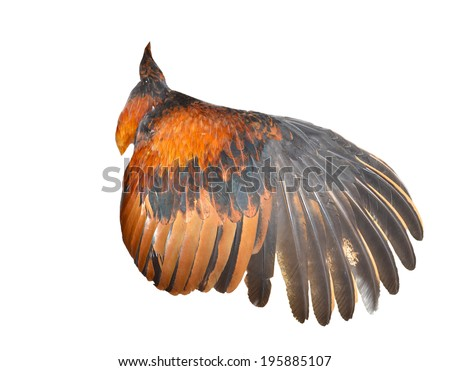 Pinion ( Chicken wings ) on the sprawling white  - stock photo
