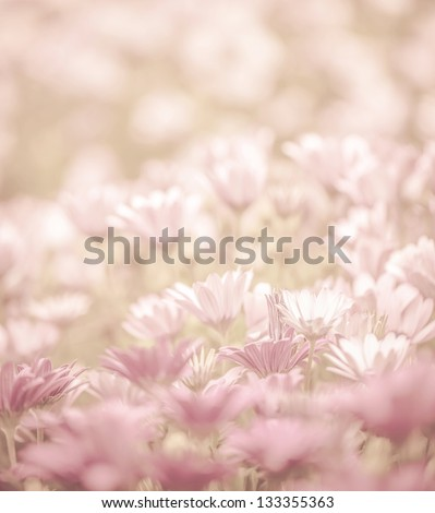 Pink abstract floral background, daisy flowers, soft focus, spring nature, blooming meadow, shallow depth of field - stock photo