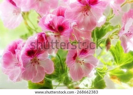 pink abstract flowers - stock photo