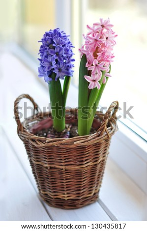 Pink and blue hyacinths on a window sill - stock photo