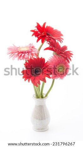 pink and red gerbera flower - stock photo