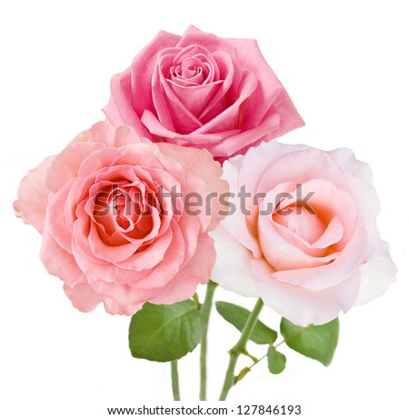 Pink and tea roses bunch isolated on white background - stock photo