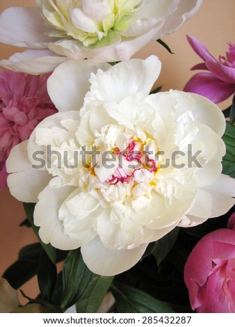 Pink and white bouquet of peonies  on a brown backgroun - stock photo