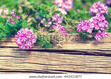 Pink and white flowers in an old wooden box - stock photo