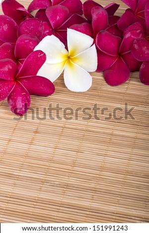 Pink and white Frangipani Plumeria flower on the mat  - stock photo