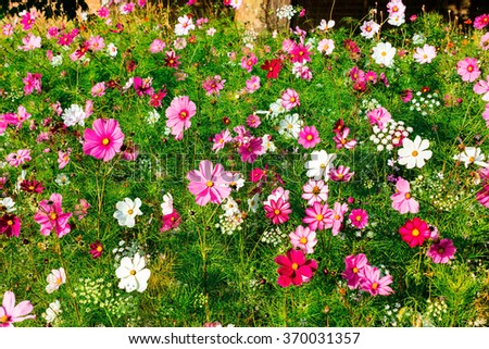 Pink and white meadow flowers. - stock photo