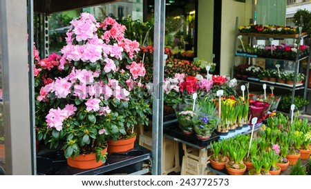Pink azalea flowerpots and other flowers for sale in flower shop in Paris (France). - stock photo