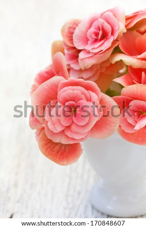 pink begonia flowers in a vase on a wooden background - stock photo
