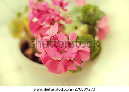 pink blooming flower - stock photo