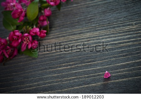 Pink  blossom and a  petal on a dark wooden background. Shallow depth of field  - stock photo