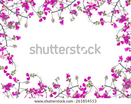 Pink Bougainvillea flower frame isolated on white background - stock photo