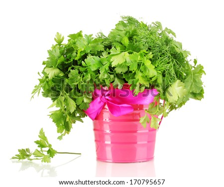 Pink bucket with parsley and dill isolated on white   - stock photo