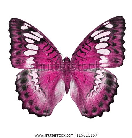 Pink butterfly isolated on white background - stock photo