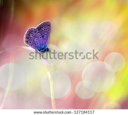 Pink butterfly macro photo - stock photo