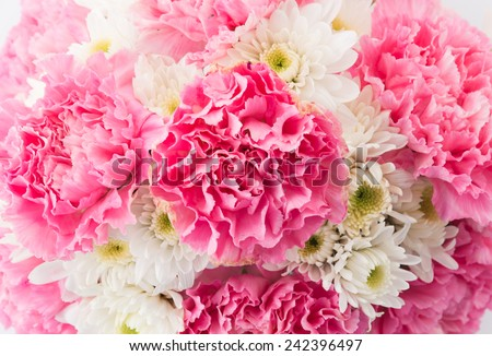 pink carnations flower on white background - stock photo