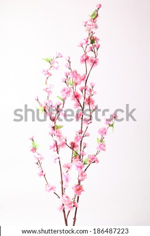 Pink cherry blossom (sakura flowers), isolated on white - stock photo