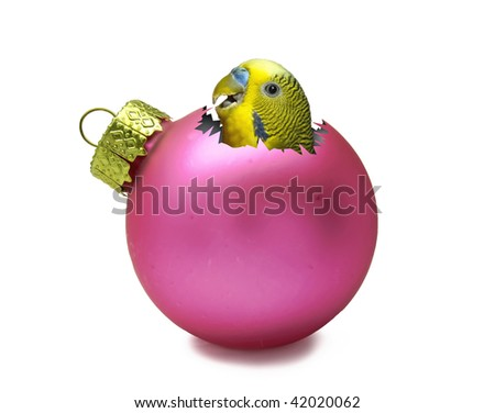 Pink christmas ball with parrot inside - stock photo