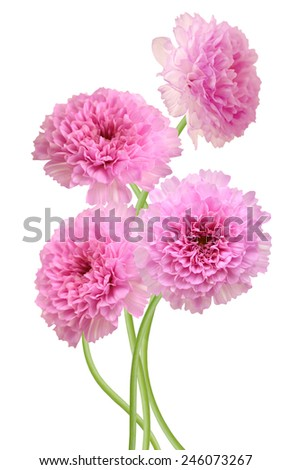pink chrysanthemum flower bouquet - stock photo