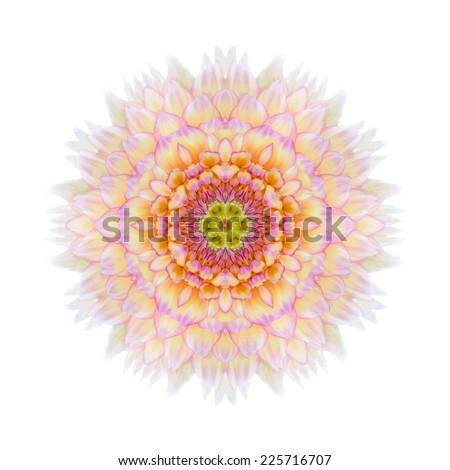 Pink Concentric Chrysanthemum Flower Isolated on Plain Background. Kaleidoscopic Mandala Design. Beautiful Natural Mirrored pattern - stock photo