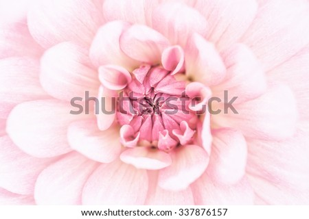 Pink dahlia petals macro, floral abstract background. Shallow DOF, high key. - stock photo
