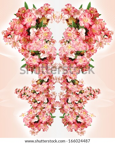 PINK DAISY - stock photo