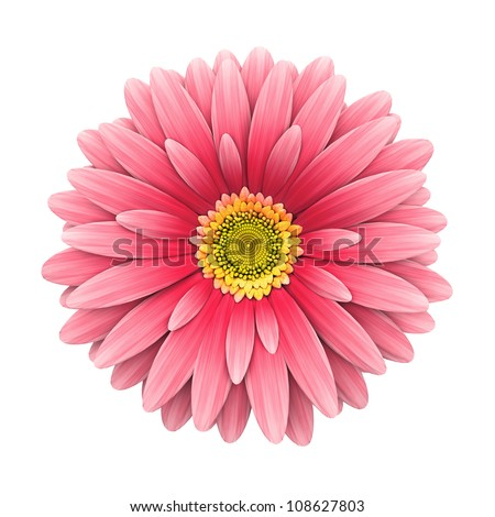 Pink daisy flower isolated on white background - 3d render - stock photo