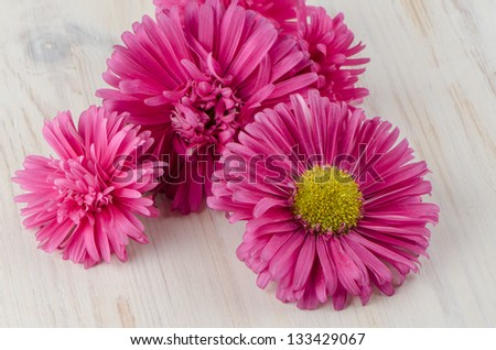 Pink daisy flowers on white painted wood background. - stock photo