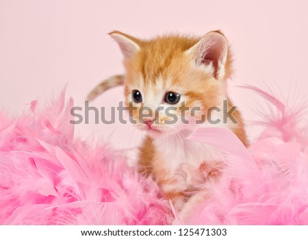 Pink feathers surrounding a ginger kitten that is so adorable - stock photo