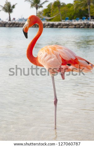 Pink flamingo standing on the beach - stock photo