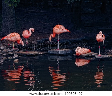 Pink flamingos sitting and standing on the edge of a pond - stock photo