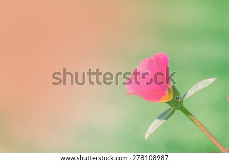 pink flower background, vintage background - stock photo