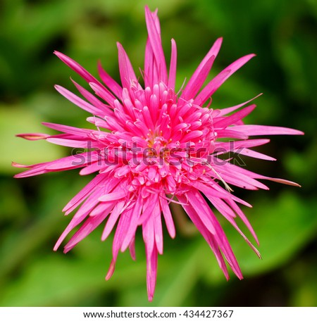 pink flower blooms      - stock photo