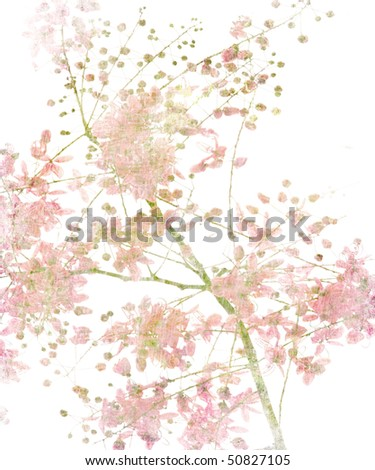 Pink Flower Blossom on White - stock photo