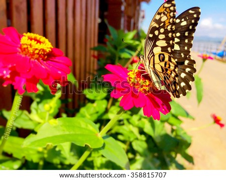 pink flower. butterfly on flower - stock photo