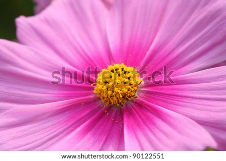 pink flower close up. - stock photo