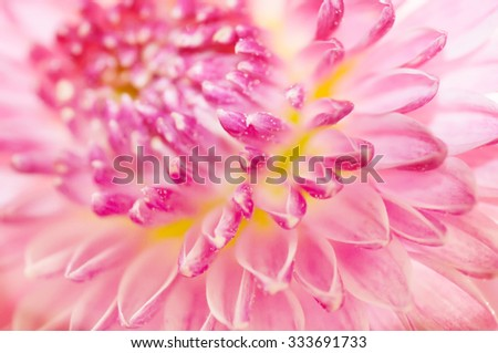 pink flower close up background - stock photo