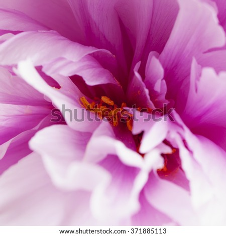 Pink flower in strict close up, square image - stock photo