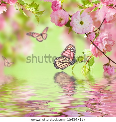 Pink flower of an Oriental cherry in and butterfly - stock photo