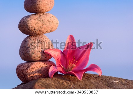 Pink flower of lily at stones on the coast - stock photo