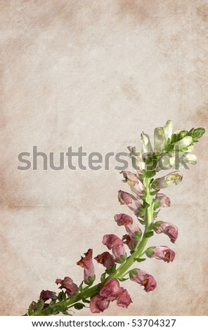 Pink flower on a vintage background. Detailed canvas texture. - stock photo