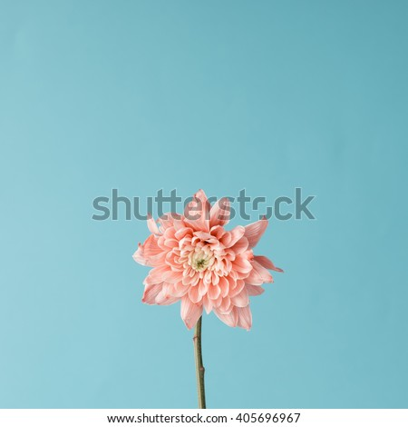 Pink flower on sky background. Minimal concept. - stock photo
