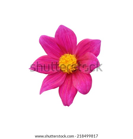 pink flower on white background - stock photo