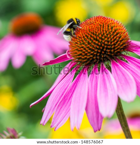 pink flower with bumblebee - stock photo