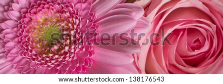 Pink flowers banner - stock photo