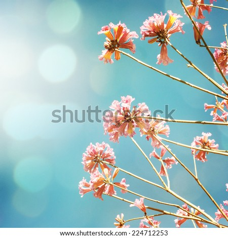 Pink  flowers blossom  - stock photo