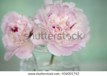 Pink Flowers in a glass vase,  isolated against pale green. - stock photo