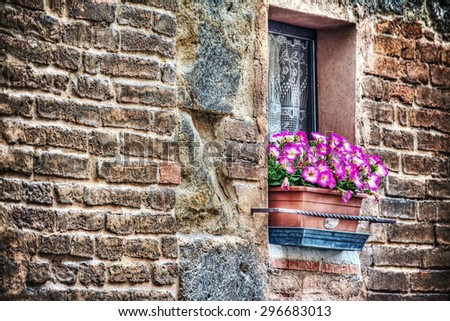 pink flowers in a rustic window sill in Florence, Italy - stock photo