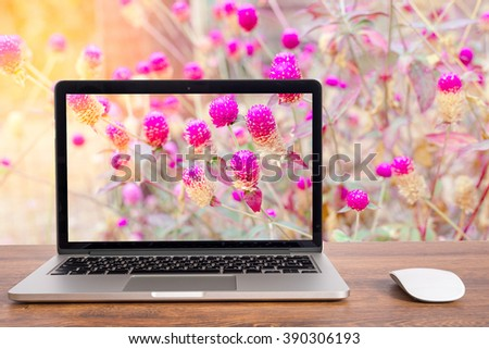 Pink Flowers. On the computer screen. - stock photo