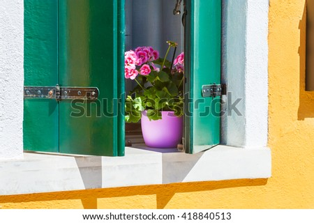 Pink flowers on the window. Colorful houses in Burano island near Venice, Italy - stock photo